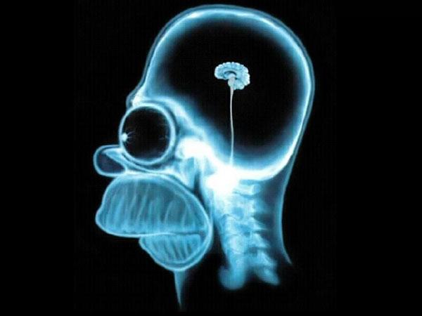 Размер мозга у Гомера Симпсона